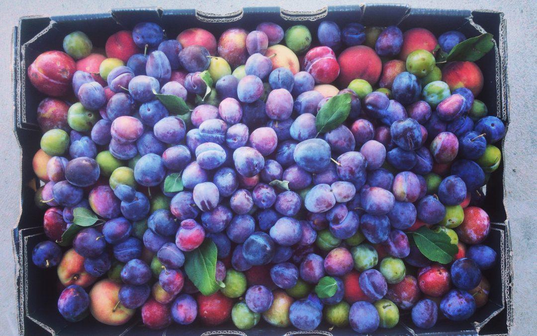 Organic stone fruit