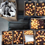 Fruit boxes packed and ready for delivery
