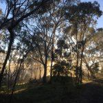 sunrising through the trees