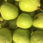 Josephine Pears
