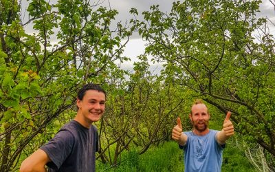 Instant Orchard Opportunity—Repeat!