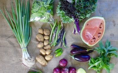 Veggie Box Subscriptions – now available