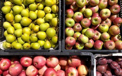 Apple, prune and plum seconds